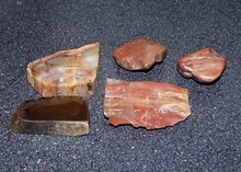 5 petrified rocks, nice collection of petrified rocks
