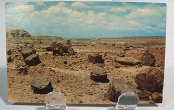 Petrified Forest Post Card