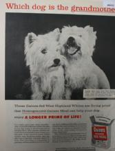 Gaines Homogenized Dog Meal 1956 Ad.