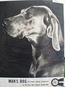 Mans Dog Ad 1949