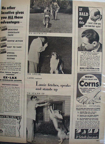 Lassie And His Trainer Ad 1951