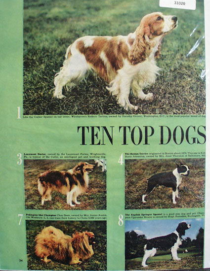 Top Ten Dogs Ad 1949