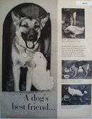 A Dogs Best Friend A Duck 1959 Pictures