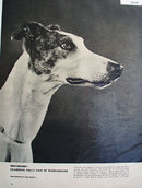 Greyhound Dog 1955 Article and Picture