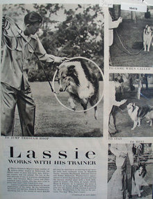 Lassie Works With Trainer Ad 1927