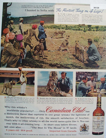 Canadian Club Whiskey Cheetah Hunt 1957 Ad