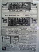 Products For Horses By Mail 1902 Ad