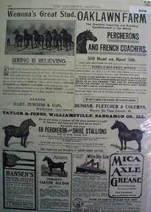 Horses For Sale 1902 Ad