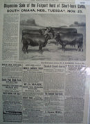 Cattle For Sale 1902 Ad