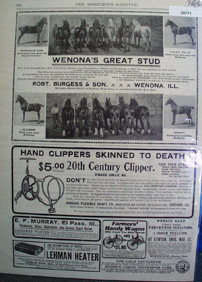 Horses And Related Products 1902 Ad