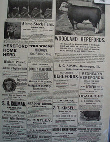 Hereford Cattle 1902 Ad.