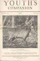 1926 picture of Rare Wapiti, photo by Roberts