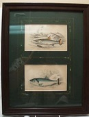 Two Fish Prints Framed  This is two prints of