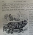 Brehm's Life of Animals Booklet