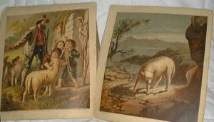 6 lithos showing lambs, they are in near mint condition in this book