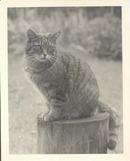 Cat photo 8 x 10