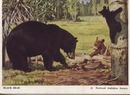 National Audubon Society Mammal Card Blk Bear