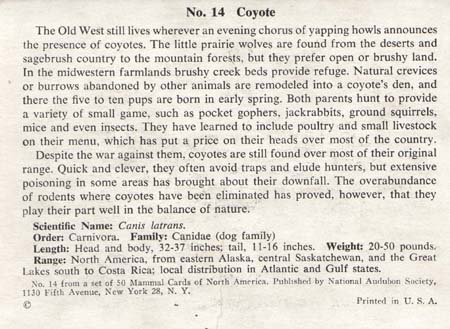 National Audubon Society Mammal Card Coyote