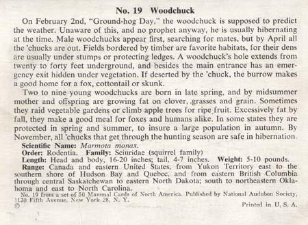 National Audubon Society Mammal Card Woodchuc