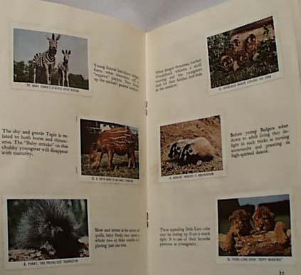 National Audubon 1954 Animal Children Book