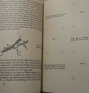 National Audubon 1955 Metamorphosis Book