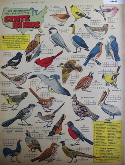 State Birds 1963 Article And Quiz