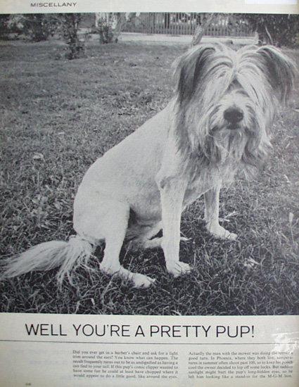 Dog Trimmed Like Lion 1963 Ad
