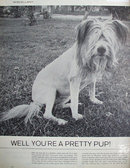Dog Trimmed Like Lion 1963 Ad