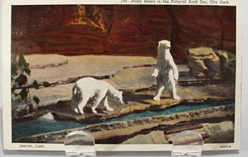 Polar Bears Denver Colo. Post Card.
