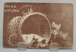 Five Kittens Quiet Place Postcard.