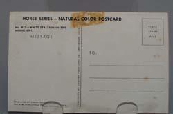 White Stallion in Moonlight Postcard