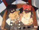 Pair Voodoo Dolls