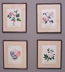 Set of 4 19thc colored D M Dewey botannical prints