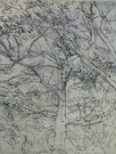 drawings landcapes trees art