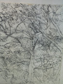 drawings landcapes trees art