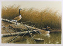 Wayne Cooper Signed Landscape Print, Willow