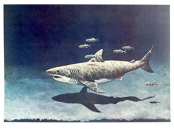 Richard Ellis Lithograph, Great White Shark