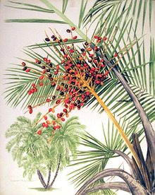 Marion  Sheehan S/N Flower Print, Floral