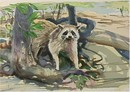Everett Hibbard S/N Lithograph, Raccoon