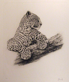 Joseph Vance S/N Etching, Leopard