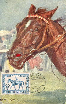 Early 1900's Postcard, Horse Portrait