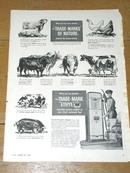 Ethyl Gas  Advertisement