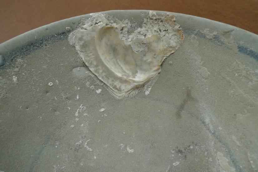 SUNKEN WRECK (1368-1644) MING DISH / BOWL / PLATE Glazed Underwater Porcelain #3