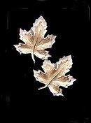 Sarah Coventry 'Nature's Choice' Leaf Earrings