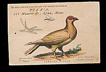1880s Pike's Smoke Shop Mass Pigeon Trade Card