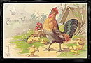 Lovely Roosters with Chicks 1906 Easter Postcard