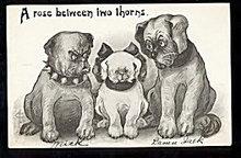 Great Phillips Artist Dogs 1907 Postcard