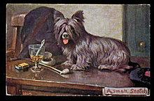 1915 'A Small Scotch' Terrier Dog EBSM Postcard