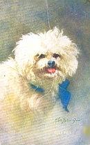 Lovely Kenyon Poodle Dog 'The Pet' Postcard