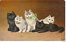 Sperlich Cats/Kittens 1906 Postcard - Lovely